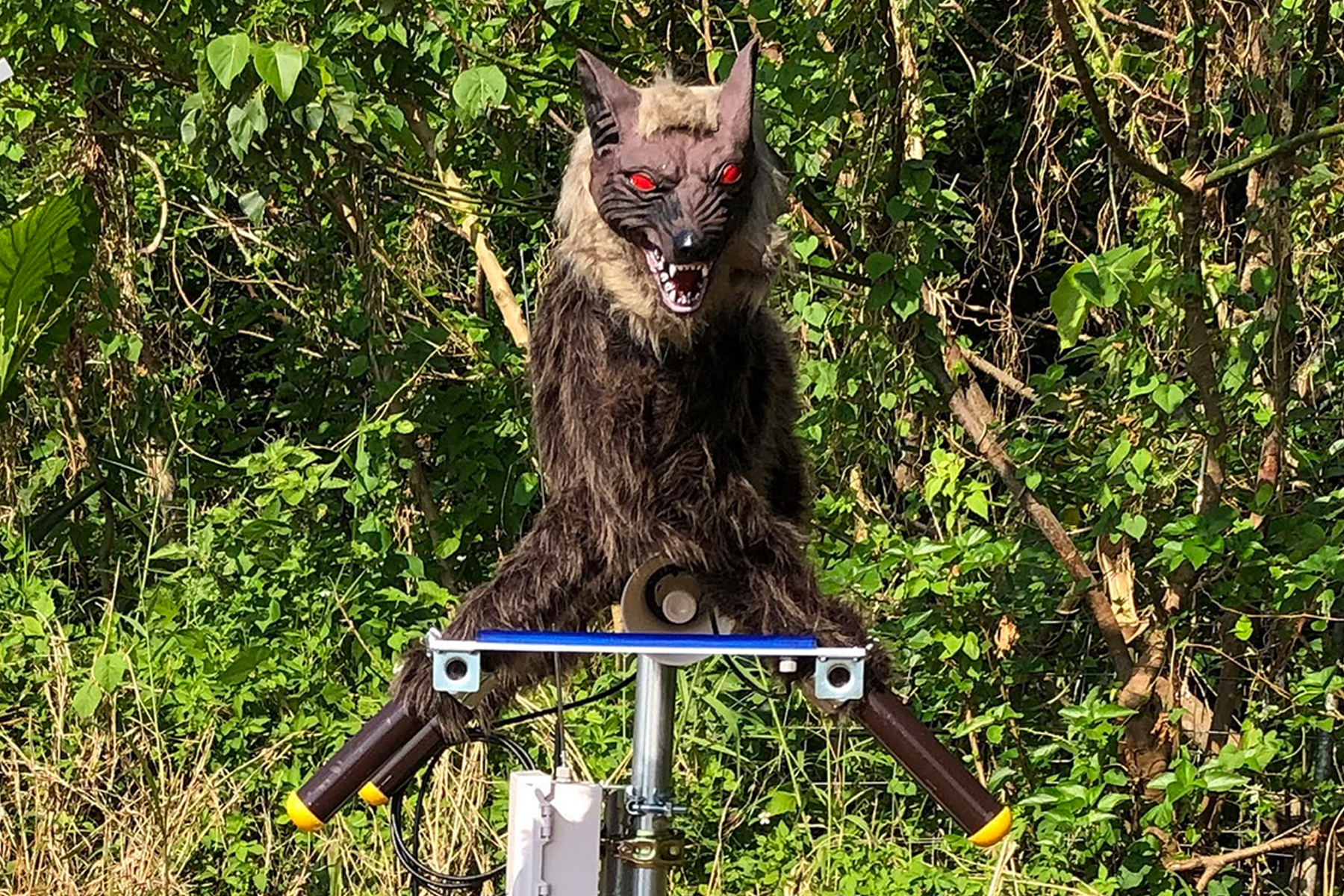 A Monster Wolf robot installed by a farm in Hokkaido | COURTESY OF WOLF KAMUY